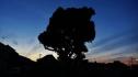 5. Chiba tree at dusk