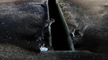 5. Hanami River Cats