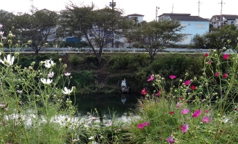Hanami River Chiba 1 man fishing