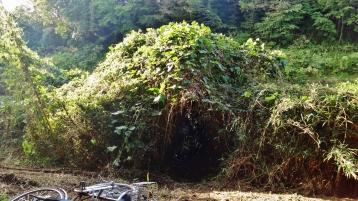 Hanami River Chiba 6 plant fortress