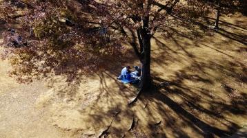 1. Family picnic fall
