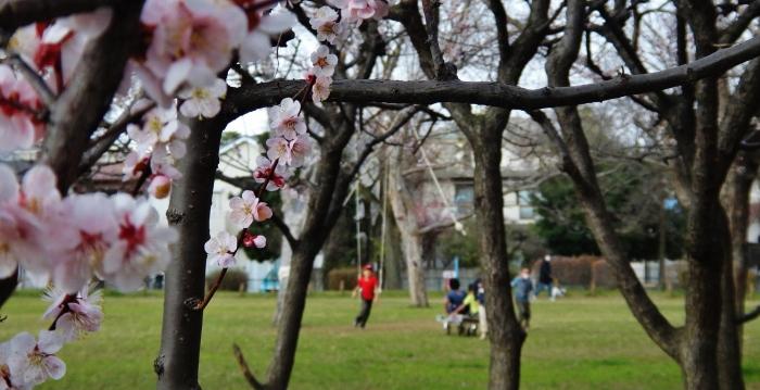 Blossom park rope swing