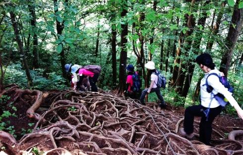 Yama garu girls tree roots