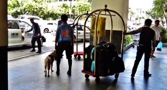Manila Makati bomb sniffing dog hotel