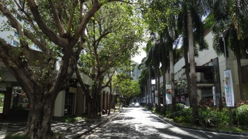 Tree-lined fancy street Makati Manila