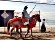 Yabusame on Zushi beach 逗子海岸流鏑馬 (horsebackarchery)