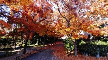 Koenji temple fall leaves