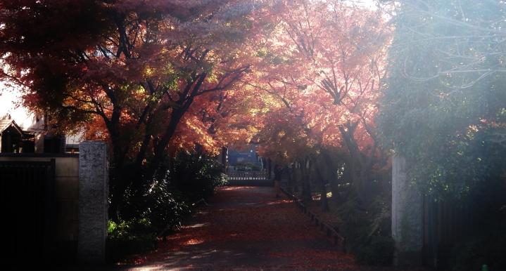 Koenji temple sunlight fall leaves
