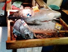 Tsukiji fish market fish head