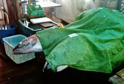 Tsukiji fish market tuna corpses