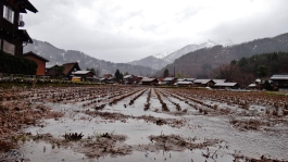 Shirakawa rainy rice field