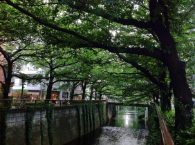 Leafy trees cover the Meguro River in Nakameguro.