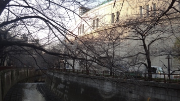 Meguro River in the winter