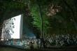 The Kodaira Referendum: fighting for Democracy in the AcornForest