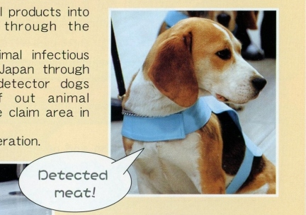 """""""Detected meat!"""""""