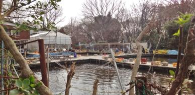 Tsuribori Musashinoen Zenpukujigawa park fish place