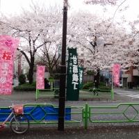 A small sample of sakura