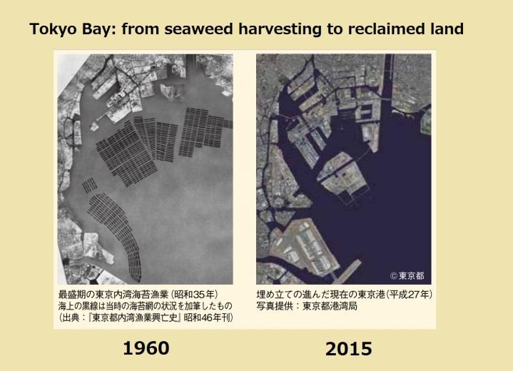 Tokyo Bay seaweed reclaimed land aerial photo map